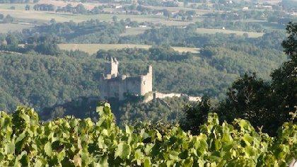 Les Vignes Grandes, M. Pierre TOURNIER