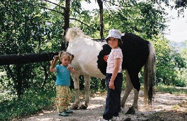 Le Batut Randonnée à poney, Le Batut Randonnée à poney