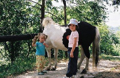 Le Batut Randonnée à poney