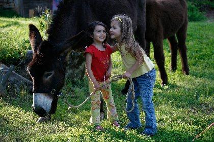 Caracol'ânes randonnée avec ânes