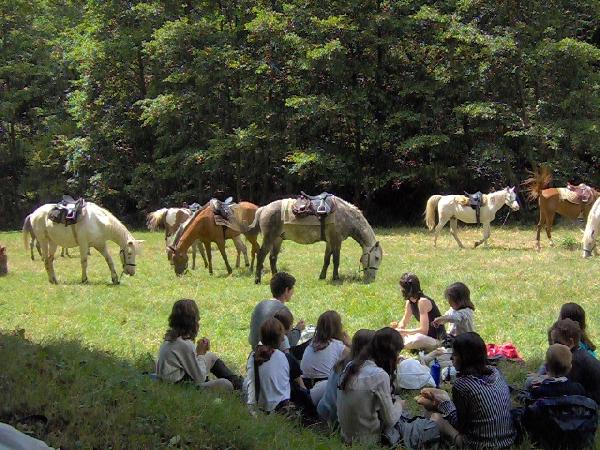Ferme Equestre du Badour - Equi'adult