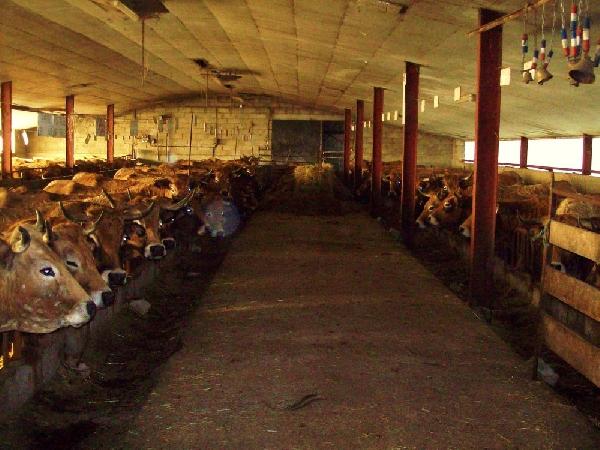 La Ferme de Sarrans -Gaec - Volailles et charcuteries fermières