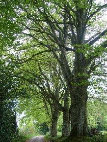 Sentier botanique des Arasses