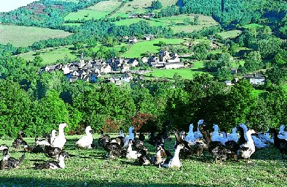 Visite de la ferme Félix Gourmand, SYNDICAT D'INITIATIVE DE LA SALVETAT PEYRALES AVEYRON SEGALA VIAUR