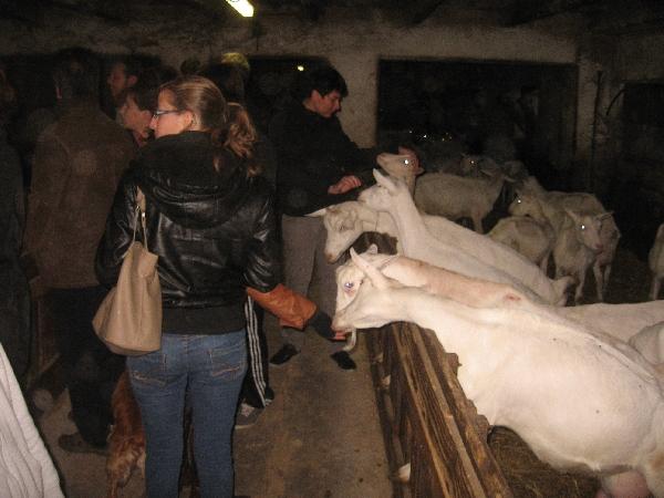 Visite d'un élevage de chèvres à la ferme de Cassos