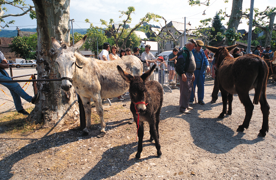 Foire aux ânes - St-Cyprien