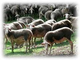 Gaec de Faral - Fromage de brebis et colis de viande