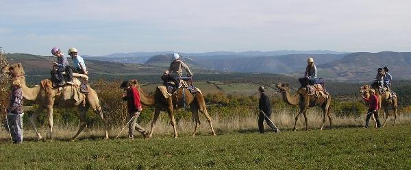 Randonnée à dromadaires - Ferme de la Blaquière (groupes)