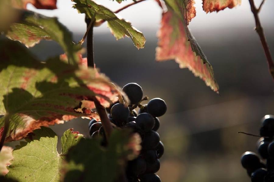 Vigne de Signols - Vins nature