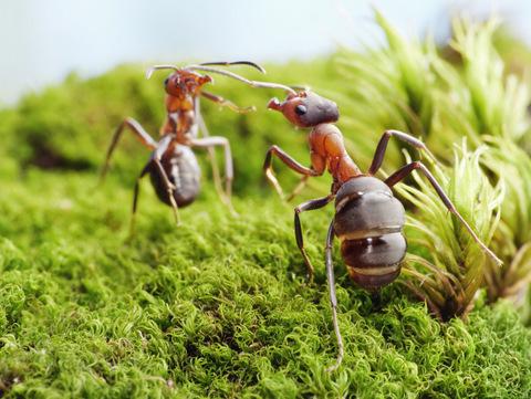 MICROPOLIS La cité des insectes