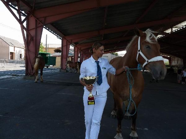 Concours d'élevage de chevaux de trait