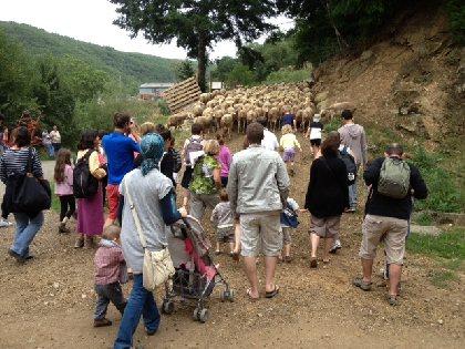 F'Estivales du Lot à l'Aubrac : Le monde des brebis