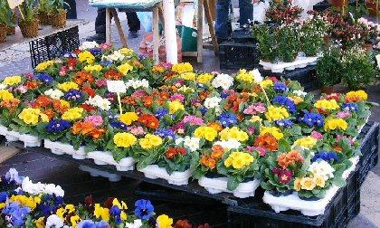 Marché aux fleurs et plants