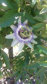 Parcours botanique et poétique de Naucelle