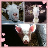 La ferme de la Borderie de Soulages-Fromages de chèvre et viande