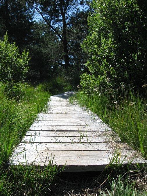 Sentier d 39 observation botanique et cologique du bois de laguiole laguiole patrimoine naturel - Office du tourisme laguiole ...