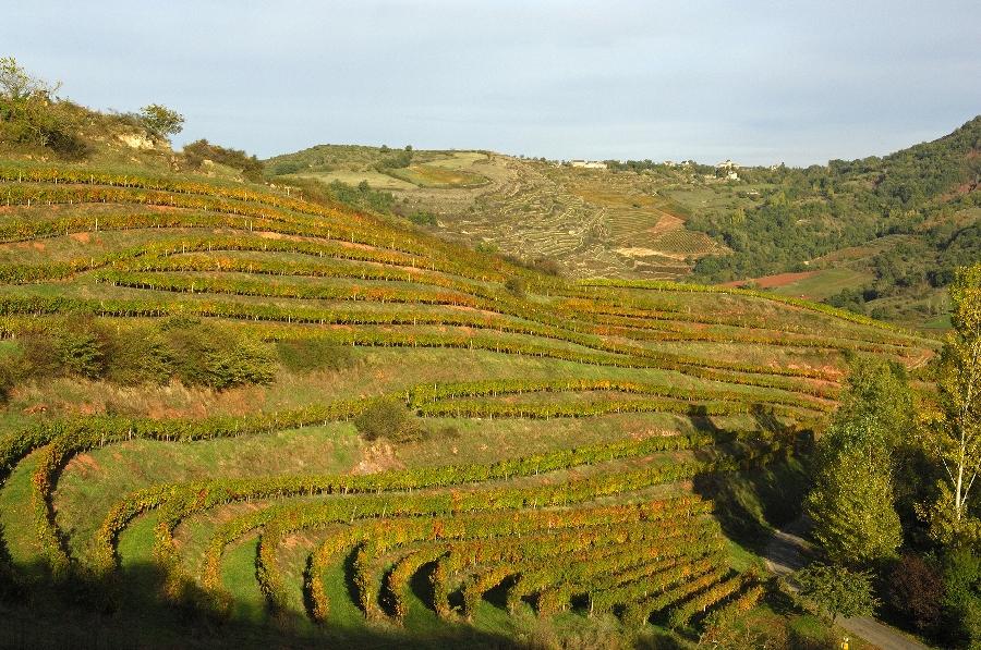 La route des vins de Marcillac