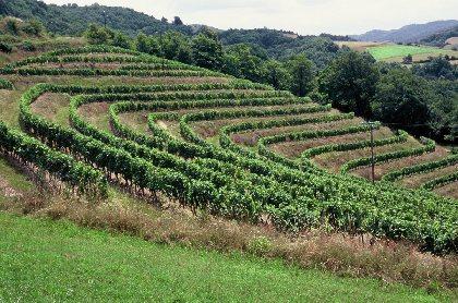 La route des vins - Entraygues-sur-Truyère - Le Fel