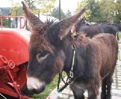 La Foire aux ânes à Thérondels ANNULE