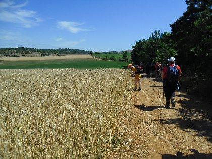 Randonnée: De Causses en Cévennes - PR43